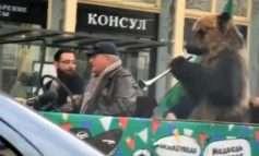 Pamje shokuese nga Moska, tifozë rus detyrojnë ariun t'i bie vuvuzelës